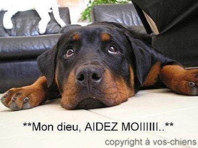 Non aux combats de chiens !!!