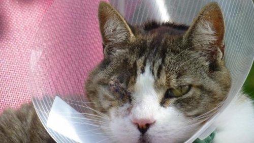 En Fin juillet, un chat a reçu un plomb dans l'½il alors qu'il se promenait dans son quartier.