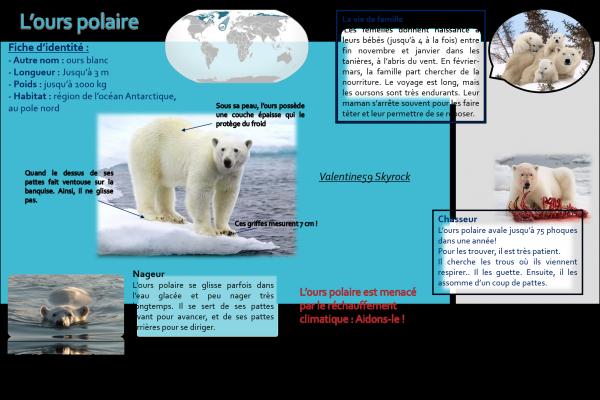 Un bébé ours polaire de deux mois à fait ses premiers pas !