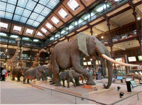 La grande galerie de l'Évolution fête ses 20 ans