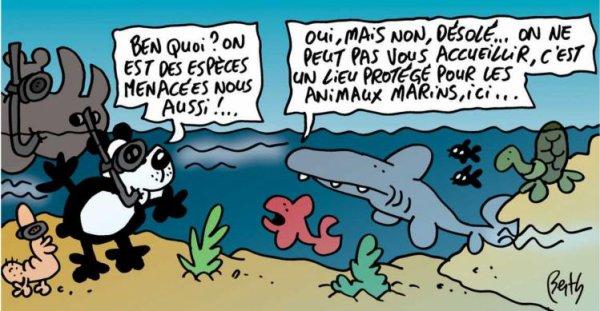 Des espèces menacées protégées de la pêche