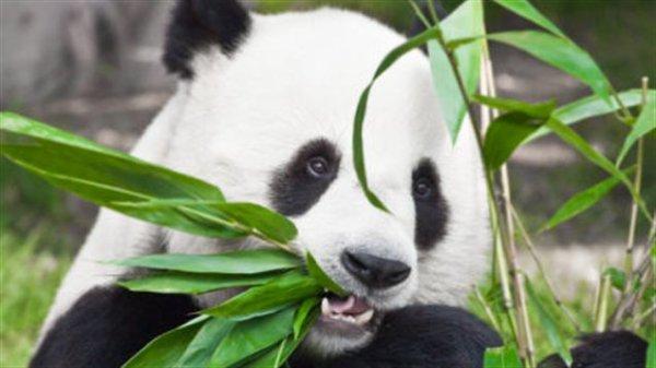 11 000 espèces animales menacées dans le monde
