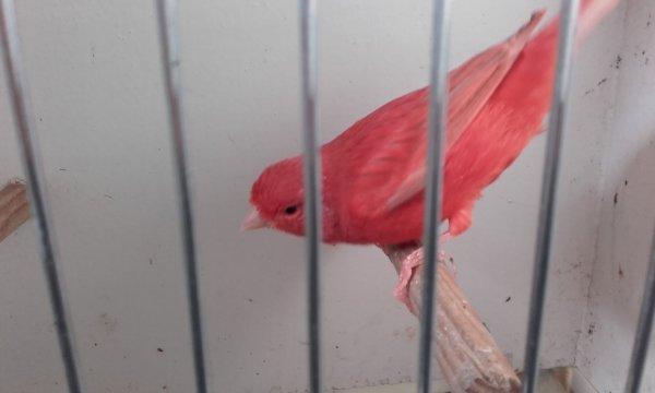 isabelle rouge intensif à l'affut