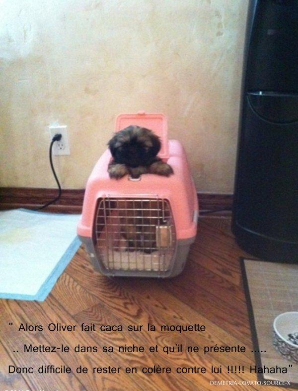 15/06/11 : Twitter  Trop mignon son nouveau petit chien :). Par contre, il fait des bêtises ^^