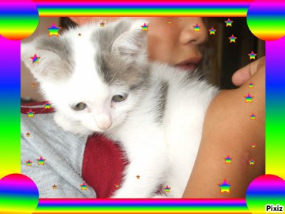 Mon chat(l)