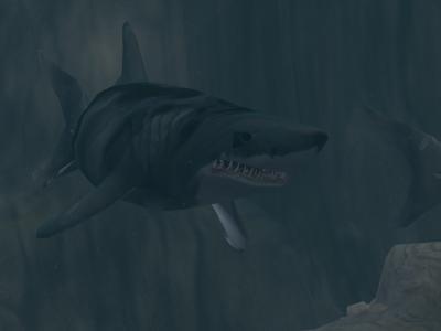 Megalodon requin dent de carbone datant