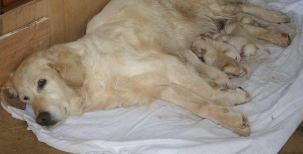 Tessy avec ses bébés