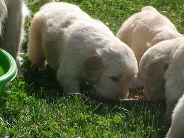 Mes bébés à 1 mois