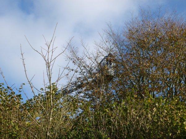 CORAY  : Frelons asiatiques : destruction d'un nid.
