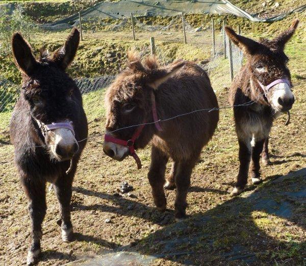 CORAY : Visite à la ferme (2)