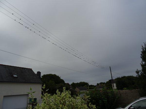 CORAY  : Les hirondelles sur le fil...
