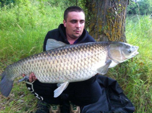 Amour blanc 13,5kg