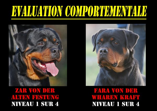 Evaluation comportementale
