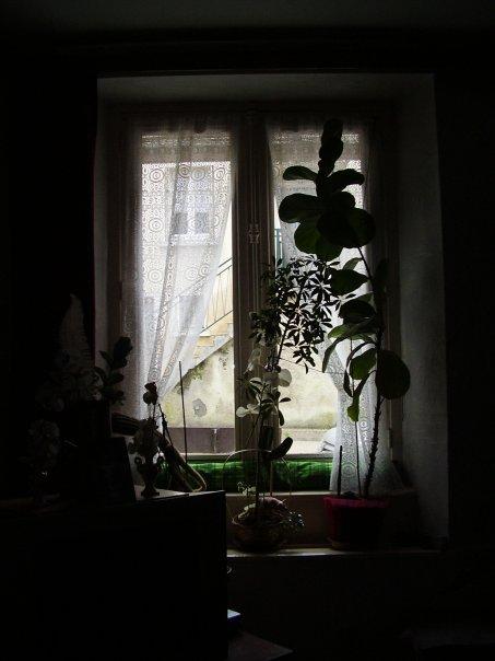 derriere la fenêtre