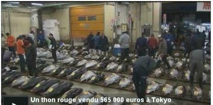 Un thon rouge vendu au prix record de 565 000 euros à Tokyo