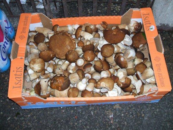 Pour les amoureux des champignons