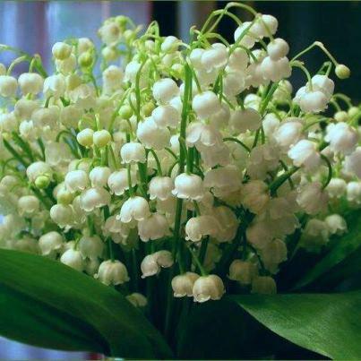 Bon 1er Mai à toutes et à tous
