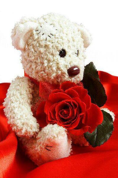 Nounours Et Rose Rouge