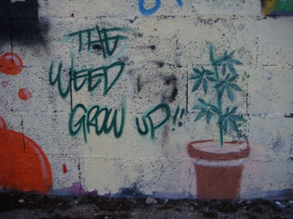 THE WEED GROW UP !!