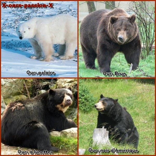 Qu'est ce qu'un ours ?