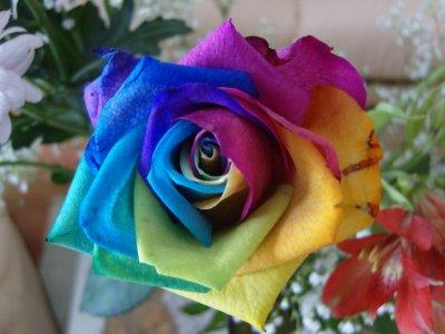 offrir des roses le monde de colorblue. Black Bedroom Furniture Sets. Home Design Ideas