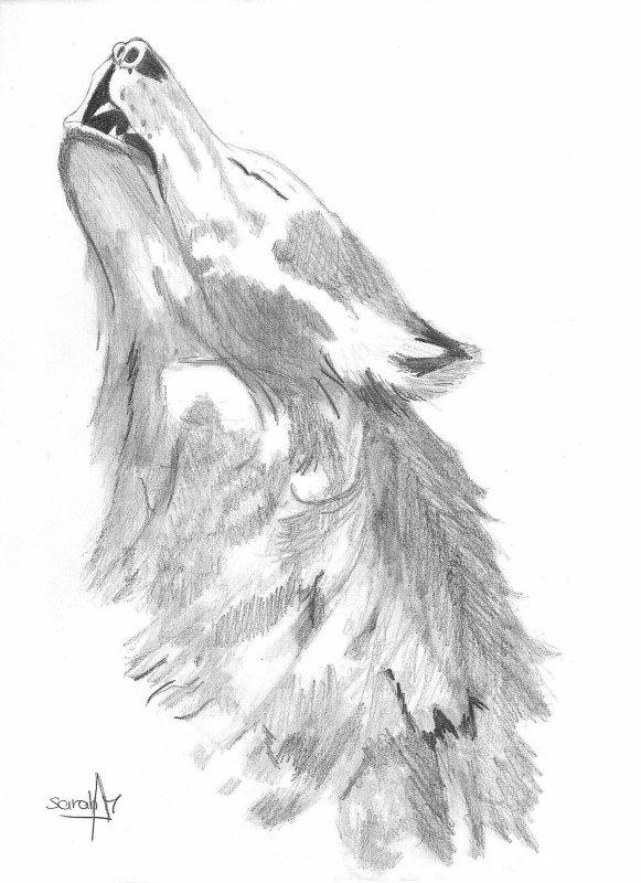 Articles de colorblue139 tagg s le loup page 2 le - Tete de loup dessin ...