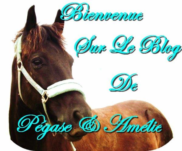 Amies du Jour, Bonjour, Amies du Soir, Bonsoir, Amies du cheval, Bon cheval.