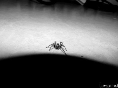 Araignié