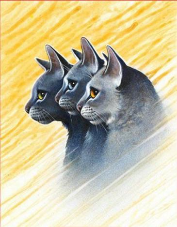 Clans de chats