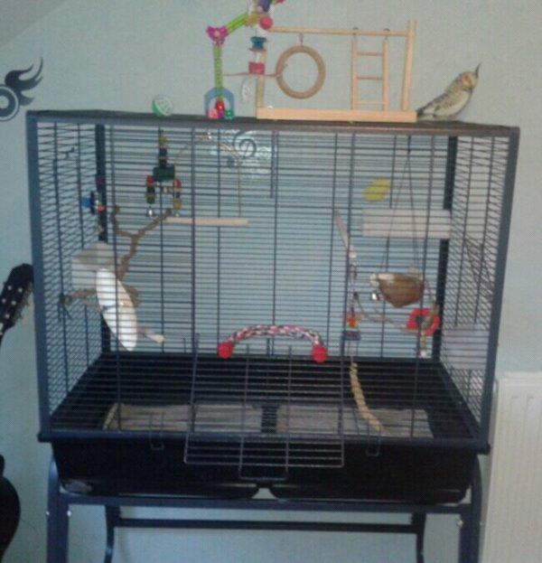 Nouvelle cage!