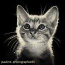 Photo de pauline-photographie85