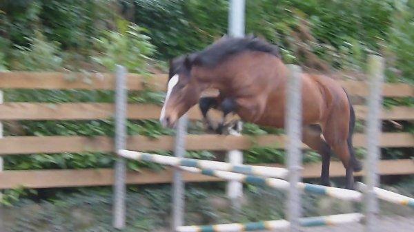 L'équitation c'est un sport, mais c'est aussi une grande partie de ma vie *