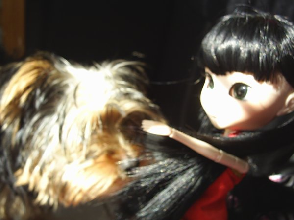 Un petit rayon de soleil a pointée son nez ... et un petit chien aussi ;)