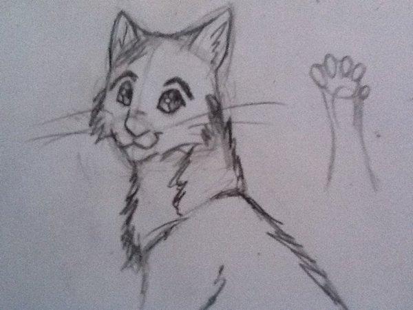 Dessin ! : Un petit chat :3