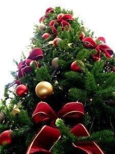 J'aime ! : Les sapins de Noël !
