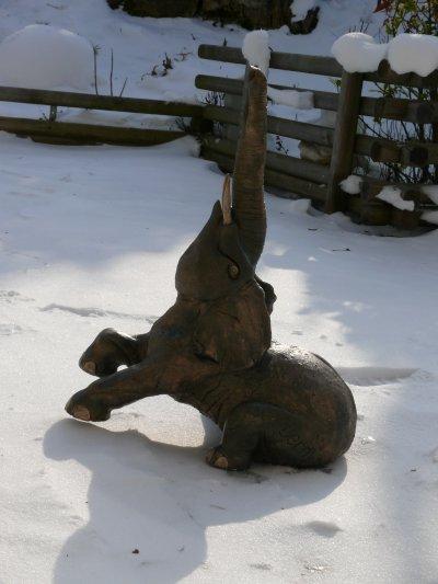 "Kandula, solide comme le rock affronte le grand  froid de l'hivers "" aujourd'hui -12 (ressenti -20)"