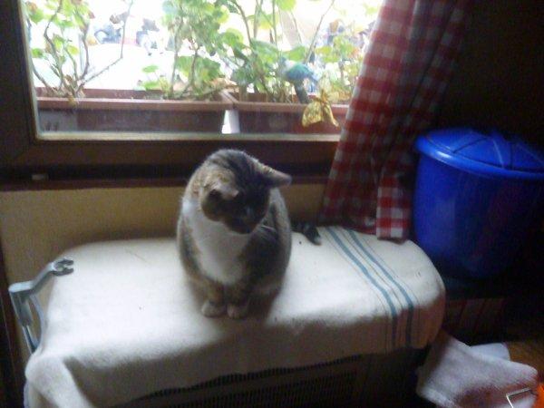 Hommage as mémère ma chatte déjà 44 semaine que tu es partie mémère Hommage as mémère une de mais chatte décède