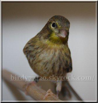 Birdy77420