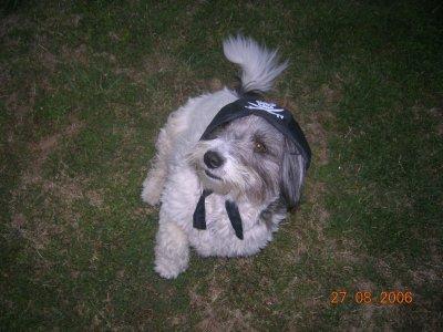 Le chien est le meilleur ami de l'Homme, alors Penny, c'est ma b3st@àAh.