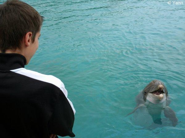Les Dauphins de Planète Sauvage :')♥.