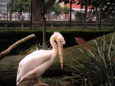 Les oiseaux du Bresil