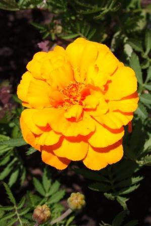 La Flore du Bresil 2