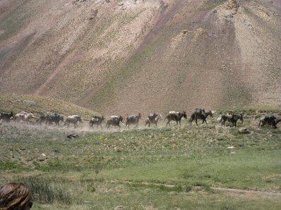 Le parque national d'aconcagua.