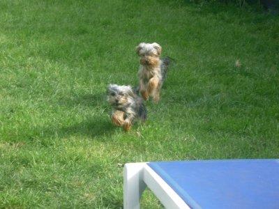 Foxie et Falco