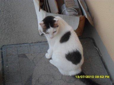 Bijou (01/04/2001 - 23/04/2011)