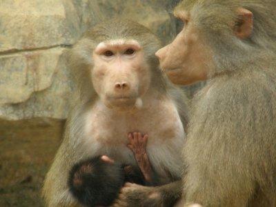 Nan Ning: zoo(2)