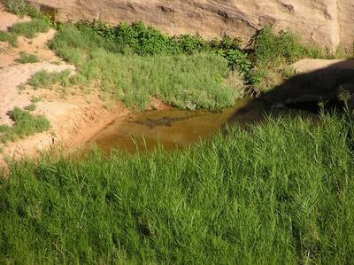 Crocodile d'Afrique de l'Ouest