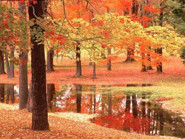 c'est l automne