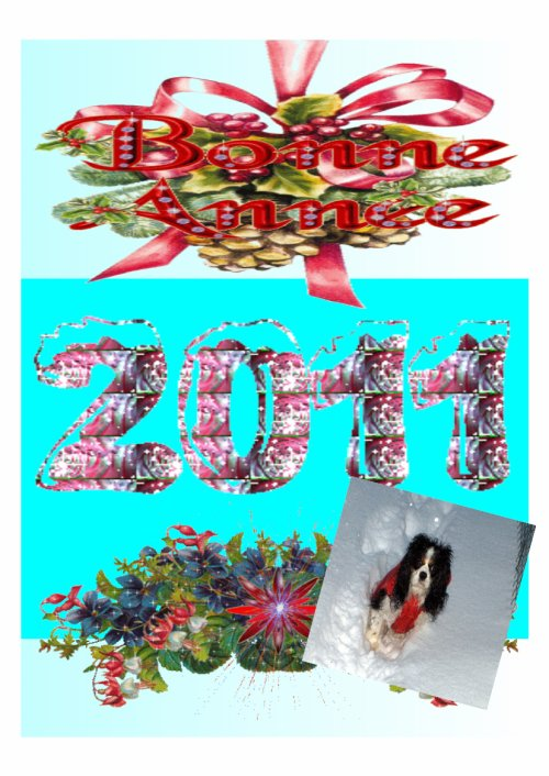 BONNE ANNEE 2011  !!!!