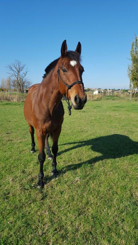 « La vue de ce petit cheval m'impressionna d'une manière que je ne puis très bien expliquer. Il était plus qu'exceptionnellement fort, rapide et superbe dans sa façon de se mouvoir, il me faisait rêver »